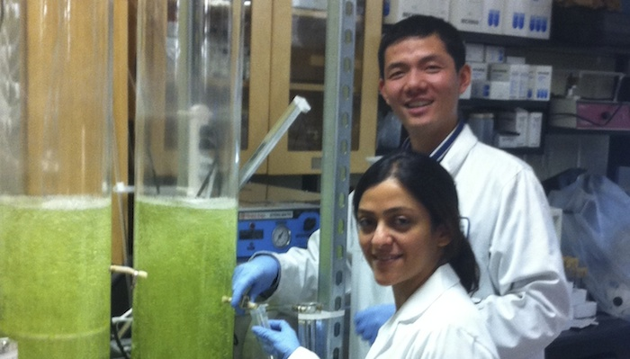 Algal growth columns for biofuels